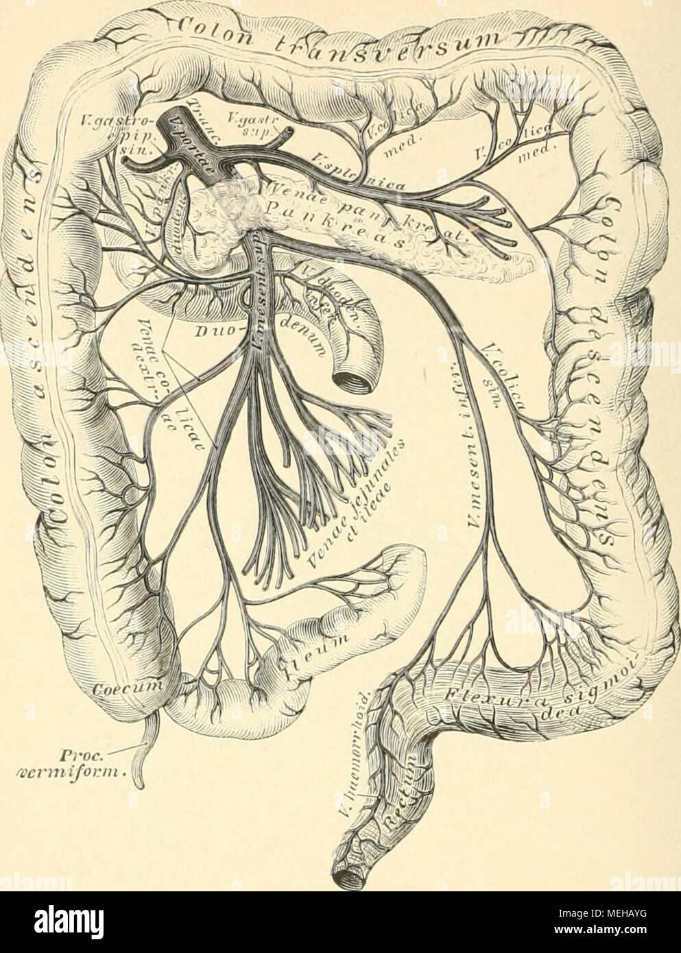 Tolle Anatomie Und Physiologie Färbung Arbeitsmappe Eine ...