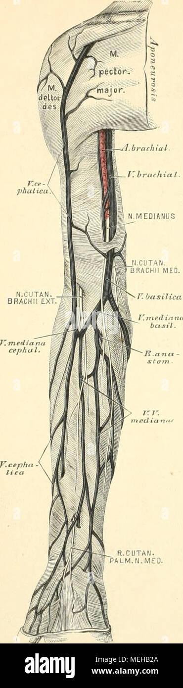 Ziemlich Einfache Anatomie Und Physiologie Fotos - Menschliche ...