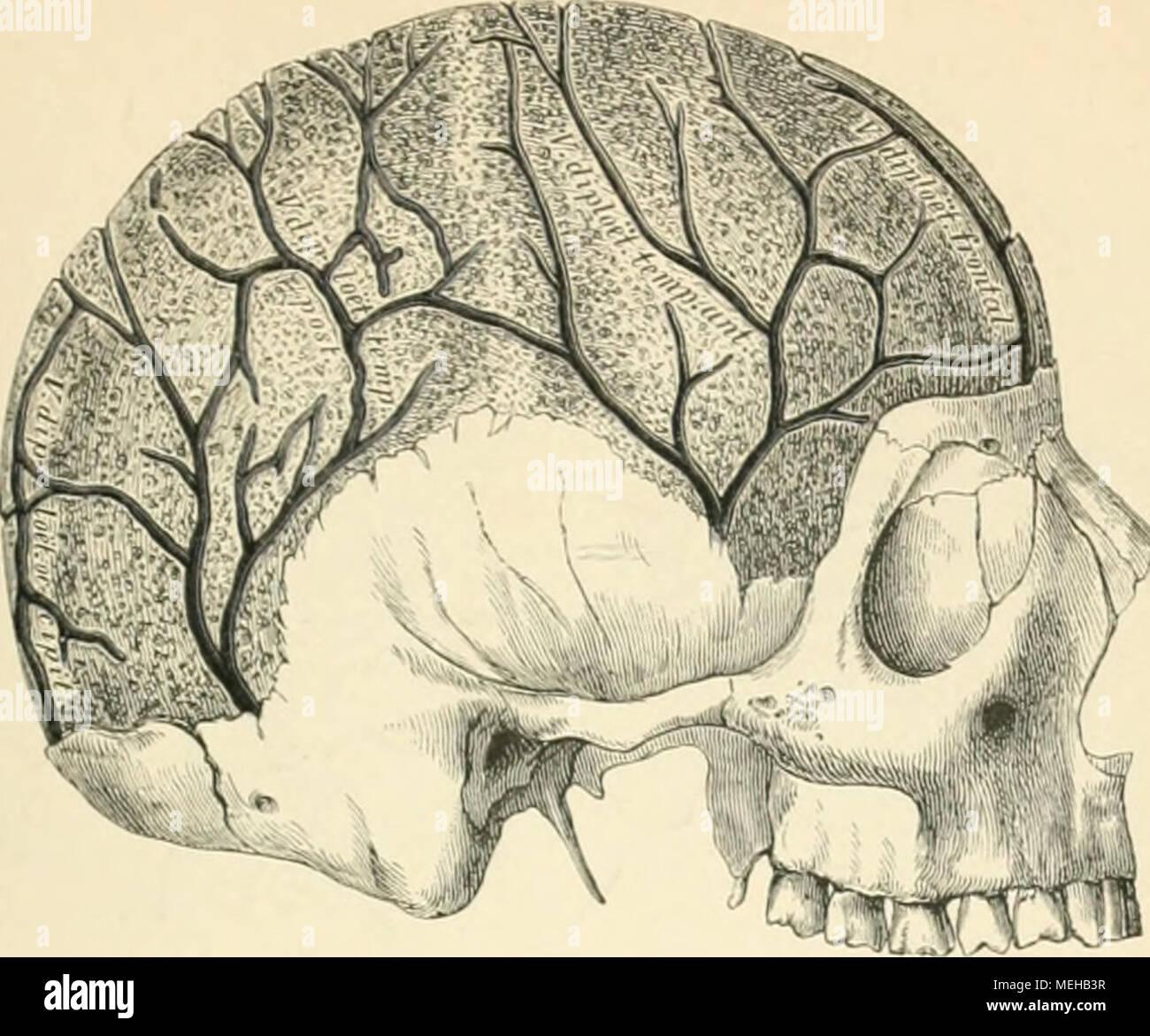 Wunderbar Vergleichende Anatomie Definition Galerie - Menschliche ...