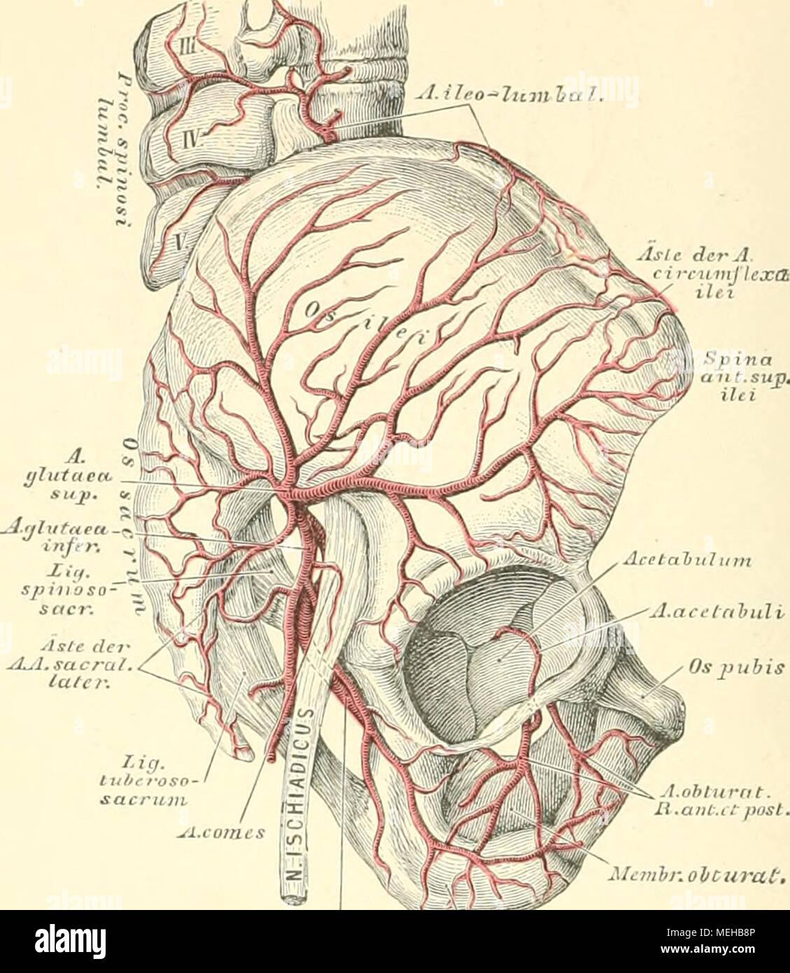 Die descriptive und topographische Anatomie des Menschen . J.p ndtnd ...