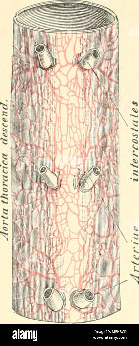 Fein Koronare Anatomie Ppt Galerie - Menschliche Anatomie Bilder ...