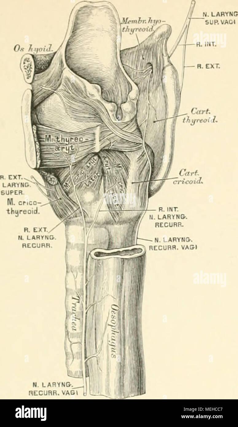 Berühmt Das Wesentliche Der Menschlichen Anatomie Und Physiologie 9 ...
