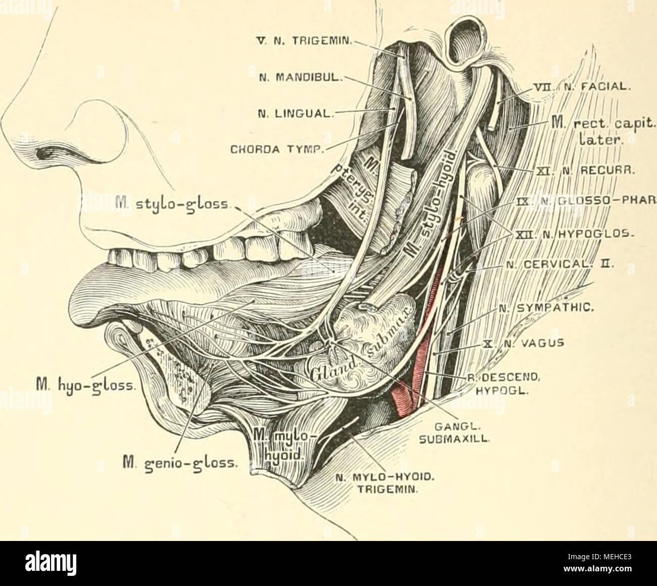 Die descriptive und topographische Anatomie des Menschen . 571. Der ...