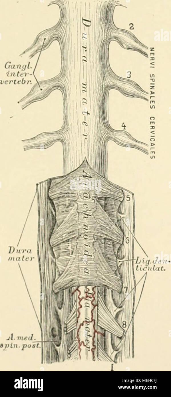 Beste Querkolon Anatomie Fotos - Anatomie Ideen - finotti.info
