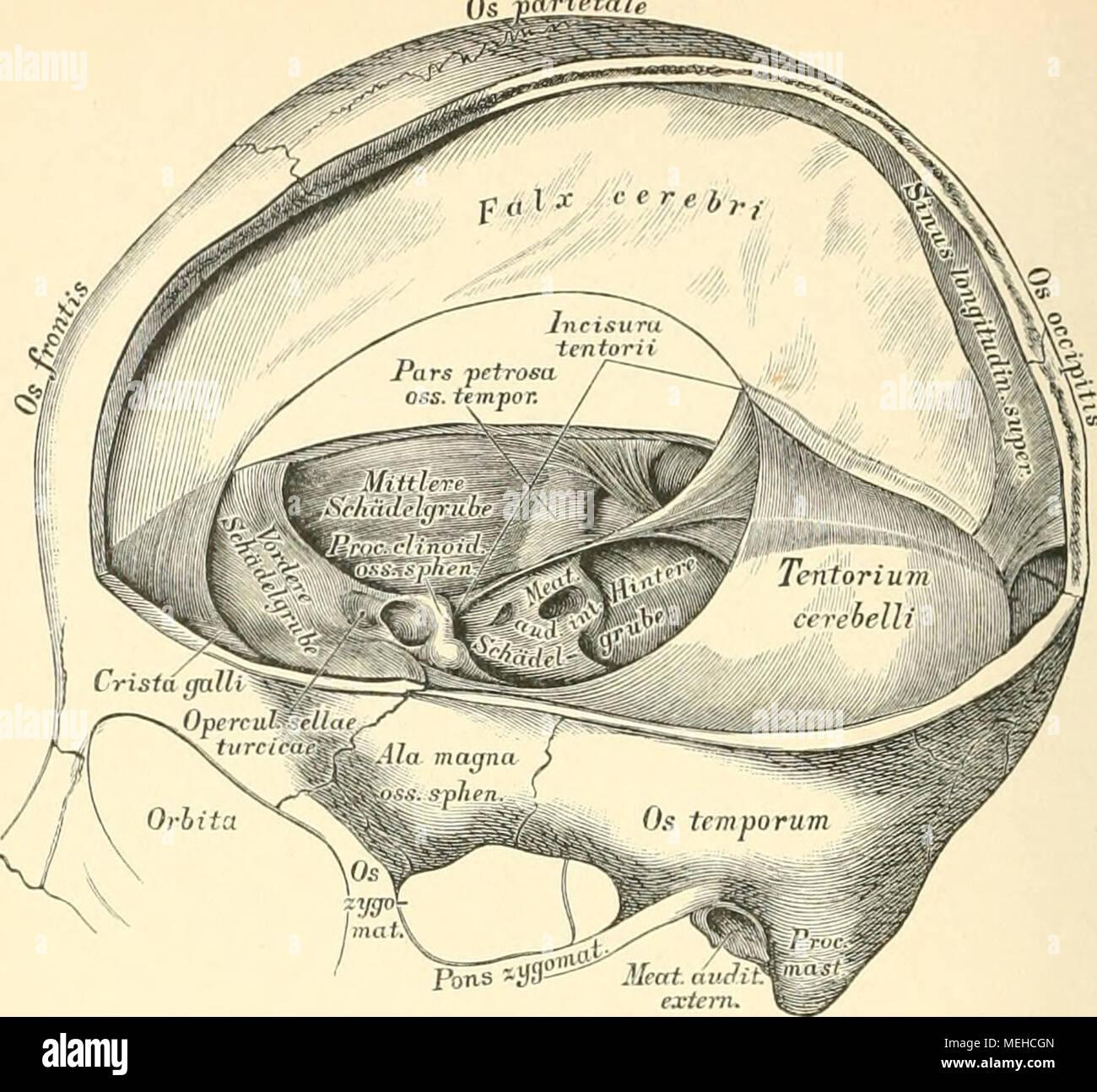 Die descriptive und topographische Anatomie des Menschen . 553. Die ...