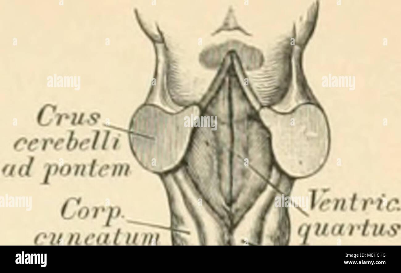 Fantastisch Richtungsbegriffe Anatomie Ideen - Anatomie Ideen ...