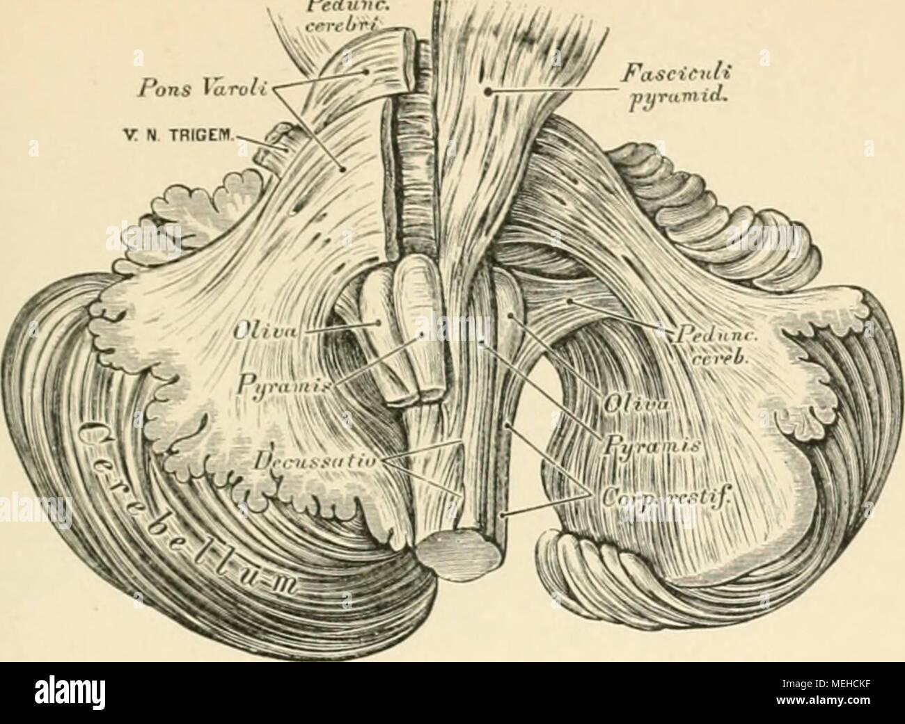 Nett Anhang Anatomie Fotos - Physiologie Von Menschlichen ...