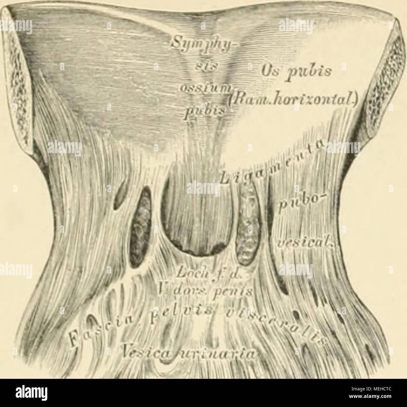 Berühmt Ati Anatomie Und Physiologie Fotos - Menschliche Anatomie ...