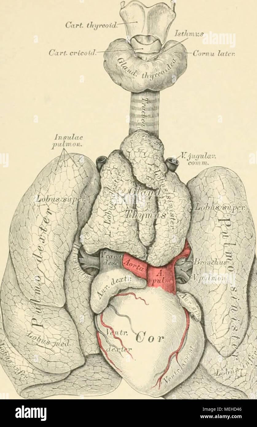 Großzügig Künstlerische Anatomie Von Dr. Paul Reicher Ideen ...