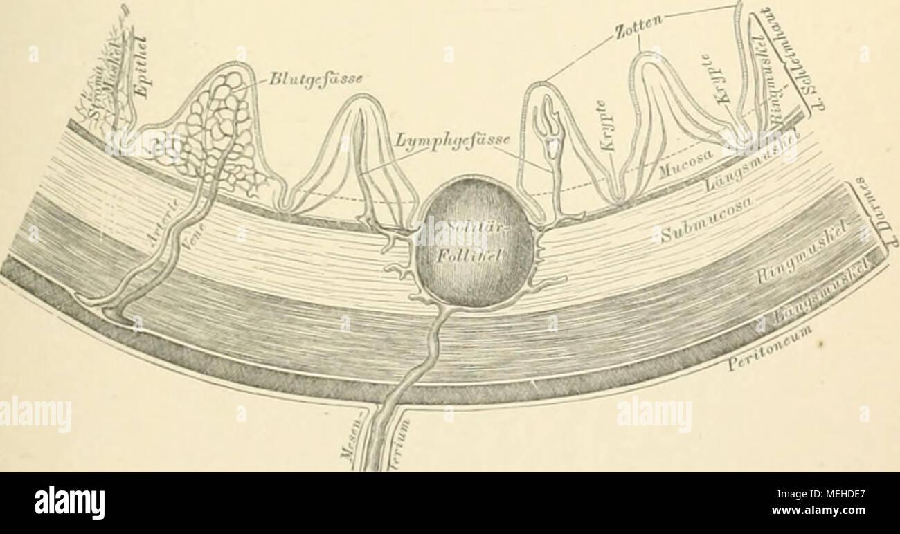 Ausgezeichnet Anatomie Querschnitt Bilder - Anatomie Von ...