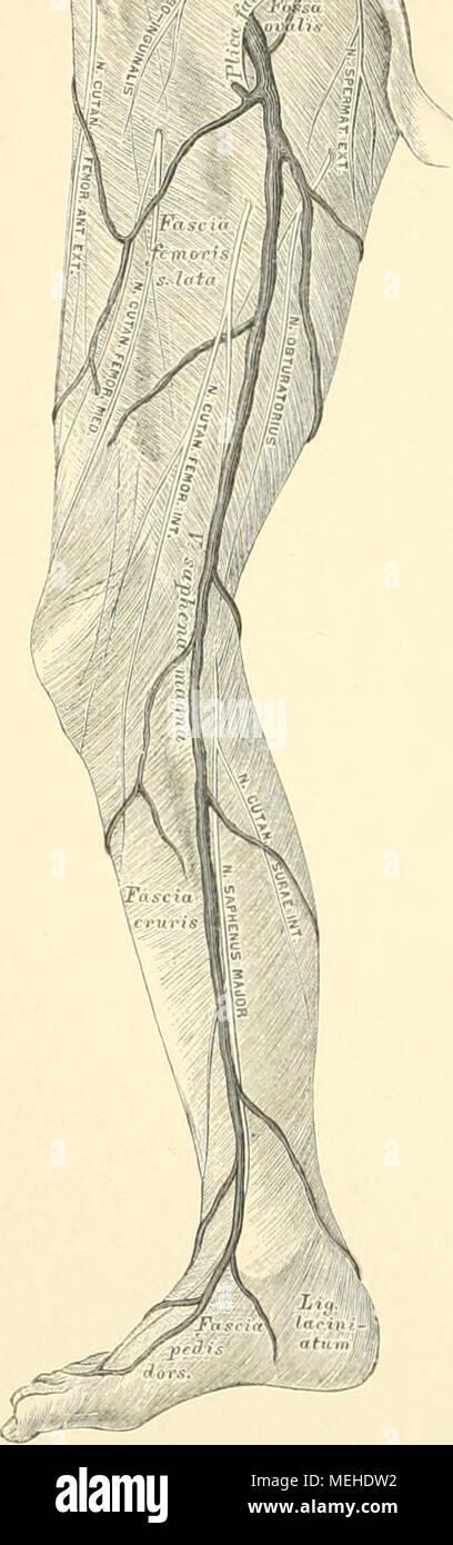 Fantastisch Anatomie Des Gaumens Fotos - Anatomie Ideen - finotti.info