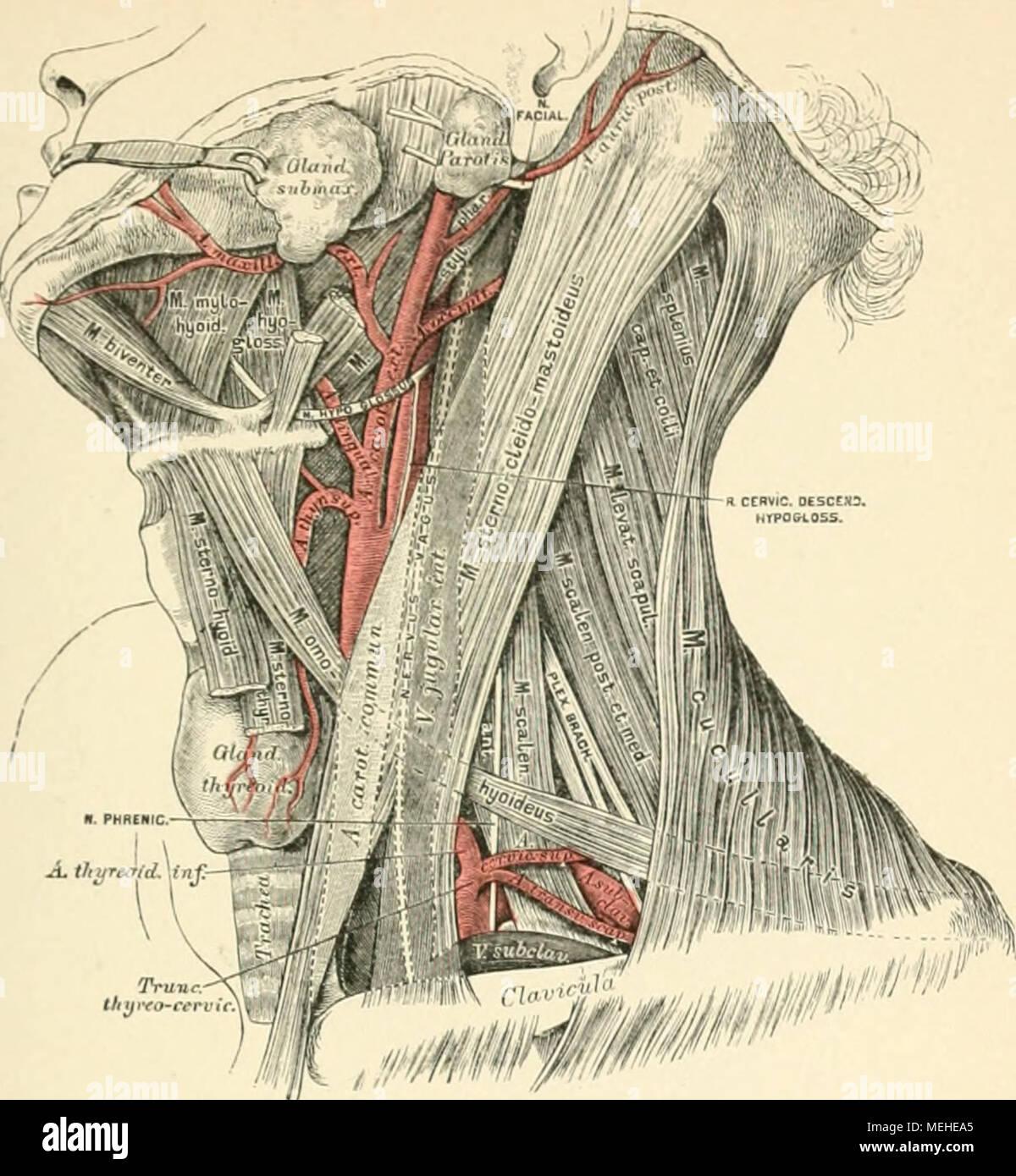 Niedlich Menschliche Anatomie Und Physiologie 10. Ausgabe Bilder ...