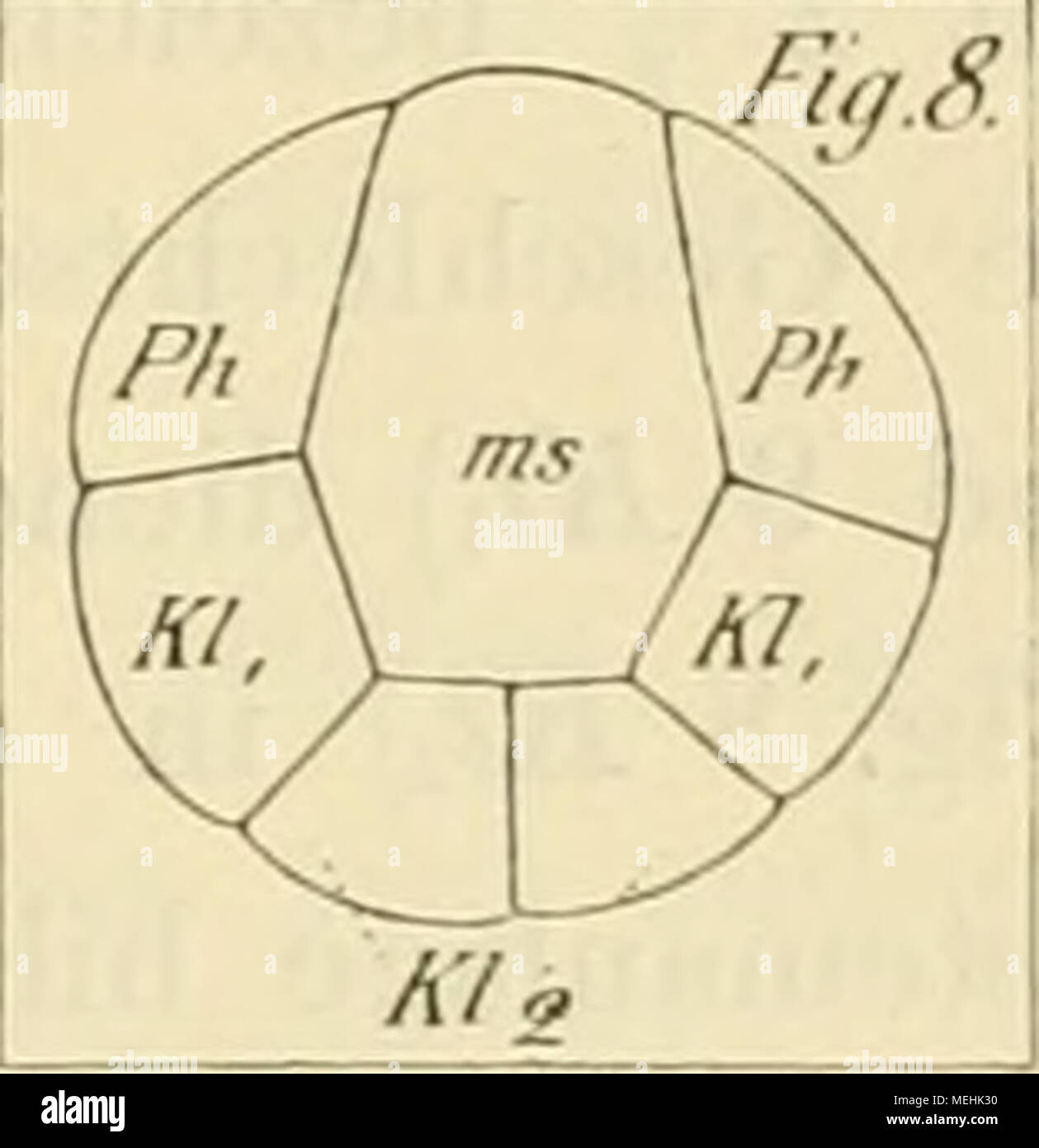 Atemberaubend Lage Des Thymusdrüse Galerie - Physiologie Von ...