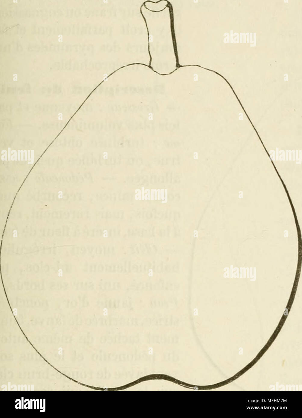 . Dictionnaire de pomologie, contenant l'histoire, la description, la figure des fruits anciens et des fruits modernes les plus g©n©ralement connus et cultiv©s . Poire BEURRà DE PENTECOTE. â Synonyme de Beiirré de Rance. Voir ce nom. Poire BEURRà (PETIT- ). â Voir Petit-Beurré. 245. Poire BEURRà PHILIPPE DELFOSSE. Synonymes. â foires : 1. Beurré Delfosse (Bivort,/l/6Mm depomologie, 1850, t. III, pp. 68 et 166). â 2. Delfosse Bourgmestre {Id. ibid.). â 3. Philippe Delfosse {Id. ibid.). â 4. Bourgmestre Delfosse (Idem, Ãnyiales de pomologie belge et étrangère, 1855, t. [II, p. 87). Descr - Stock Image