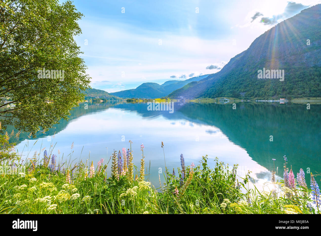 Barsnesfjorden with colourful lupins, Norway, fjord landscape with blooming flowers illuminated by the rising sun, side arm of the Sognefjorden - Stock Image
