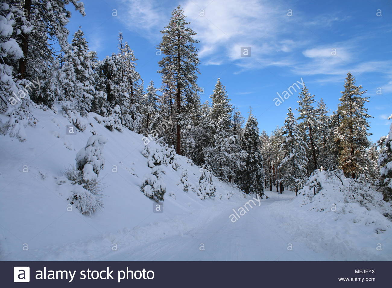Snow Covered Cuddy Valley Road in Frazier Park near Mt Pinos, Los Padres National Park, Los Angeles, CA, USA - Stock Image
