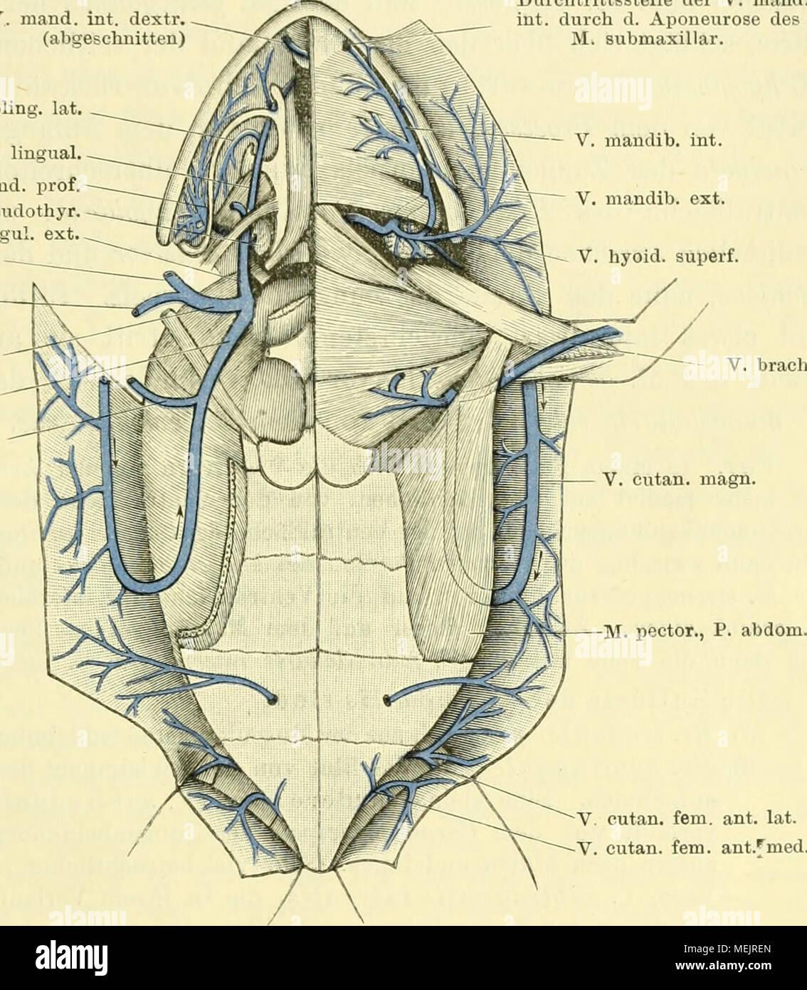 Großartig Kapitel 2 Anatomie Und Physiologie Färbung Arbeitsmappe ...