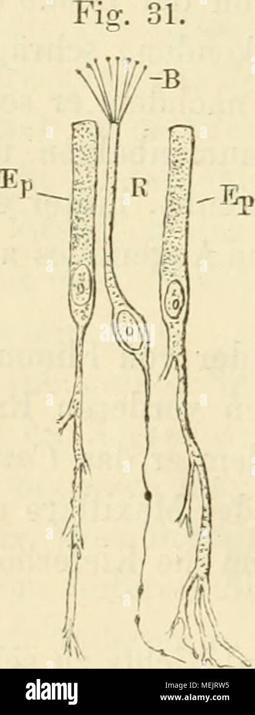 Atemberaubend Anatomie Und Physiologie Epithelgewebe Bilder ...