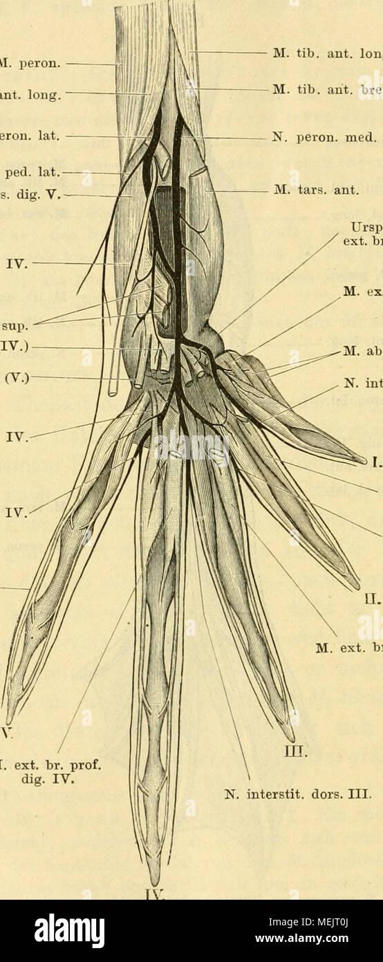 Fein Anatomie Und Physiologie Haupt Fotos - Menschliche Anatomie ...