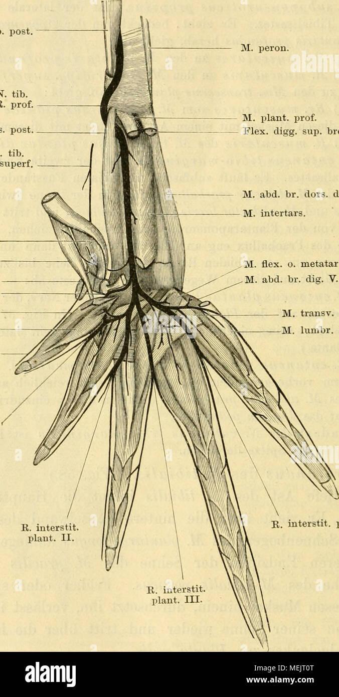 Die Anatomie des Frosches; ein Handbuch für Physiologen, Ãrzte und ...