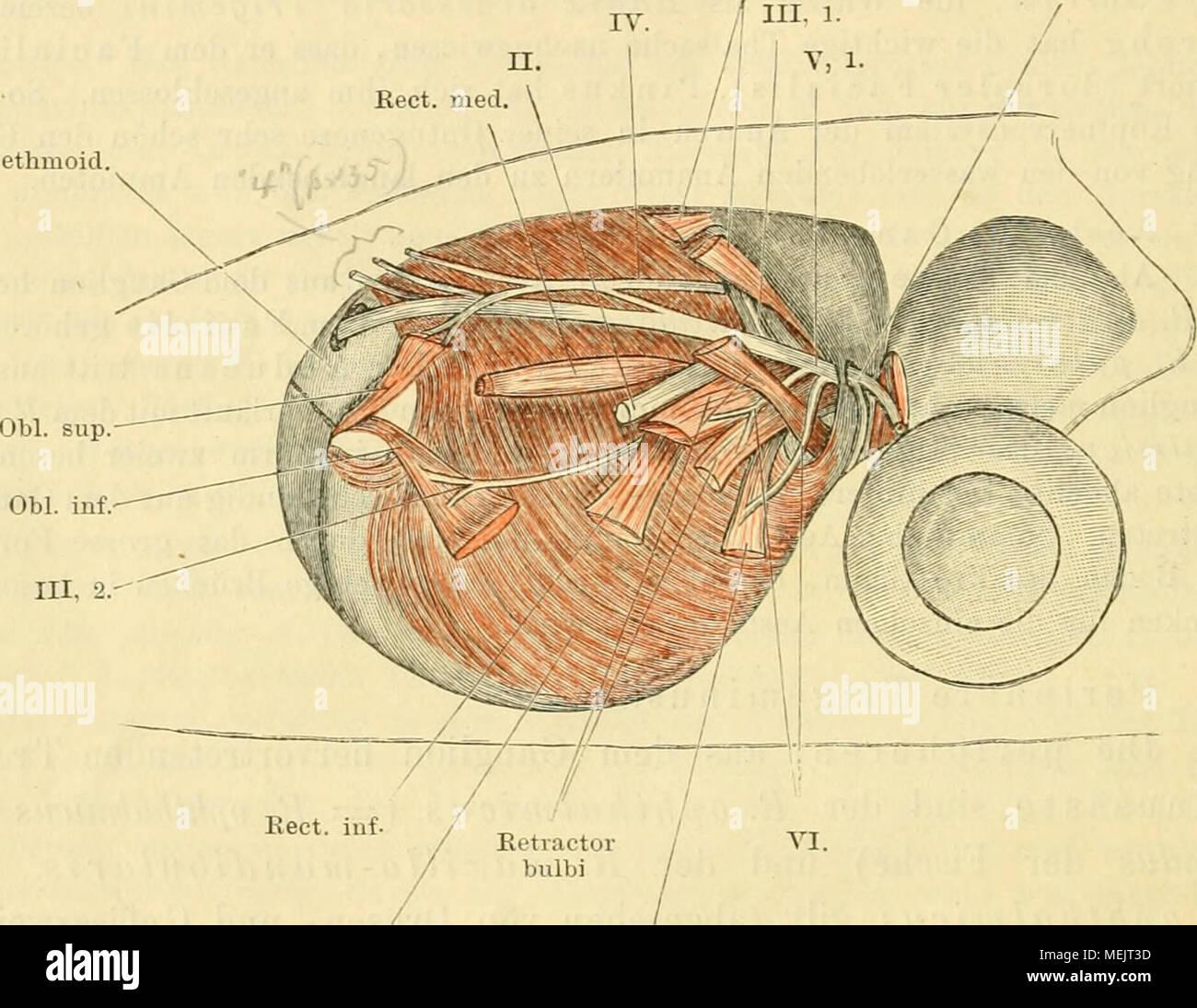 Gemütlich Augen Orbit Anatomie Fotos - Menschliche Anatomie Bilder ...