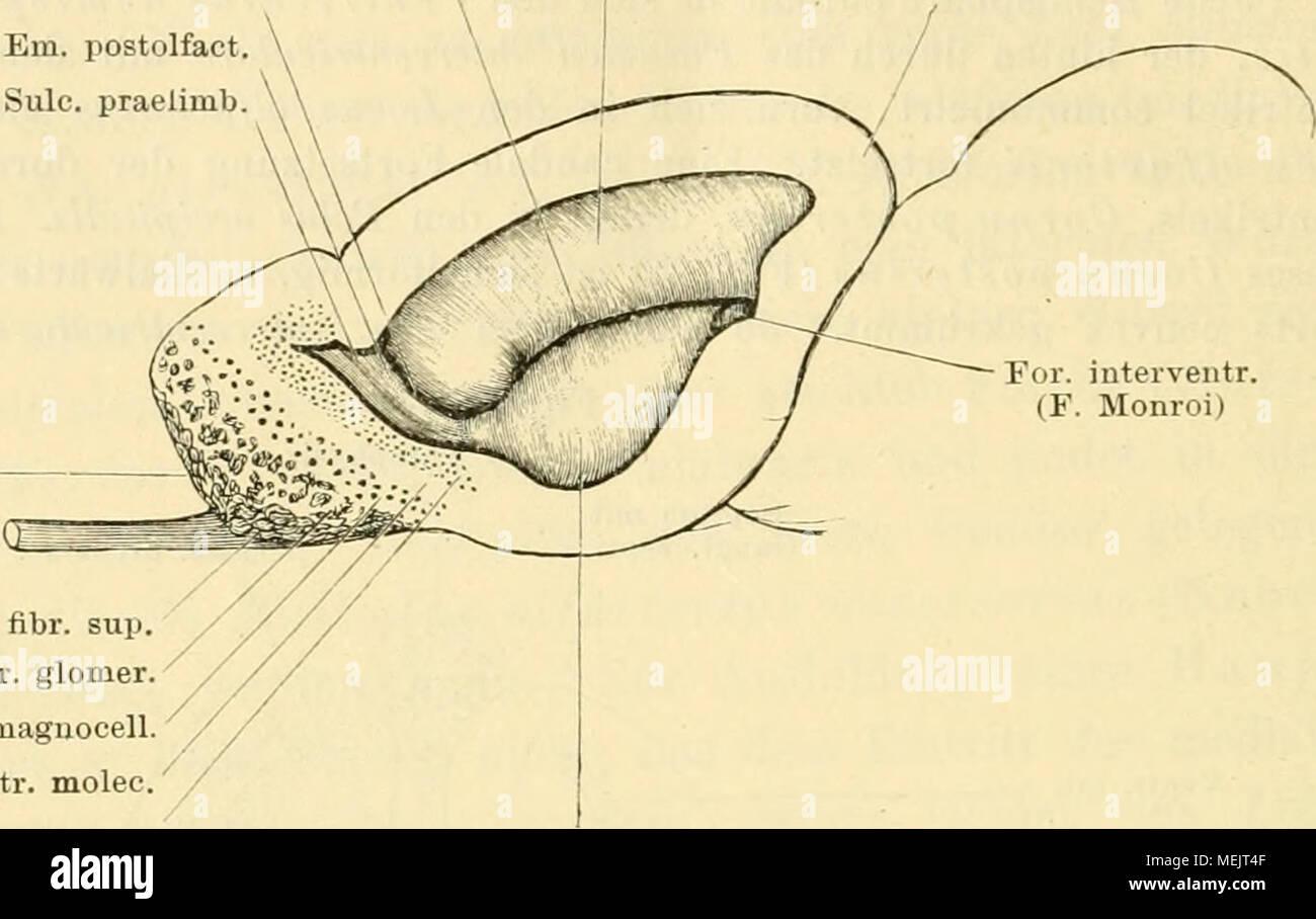 Fein Menschliche Anatomie Und Physiologie Marieb 9. Auflage Mit ...