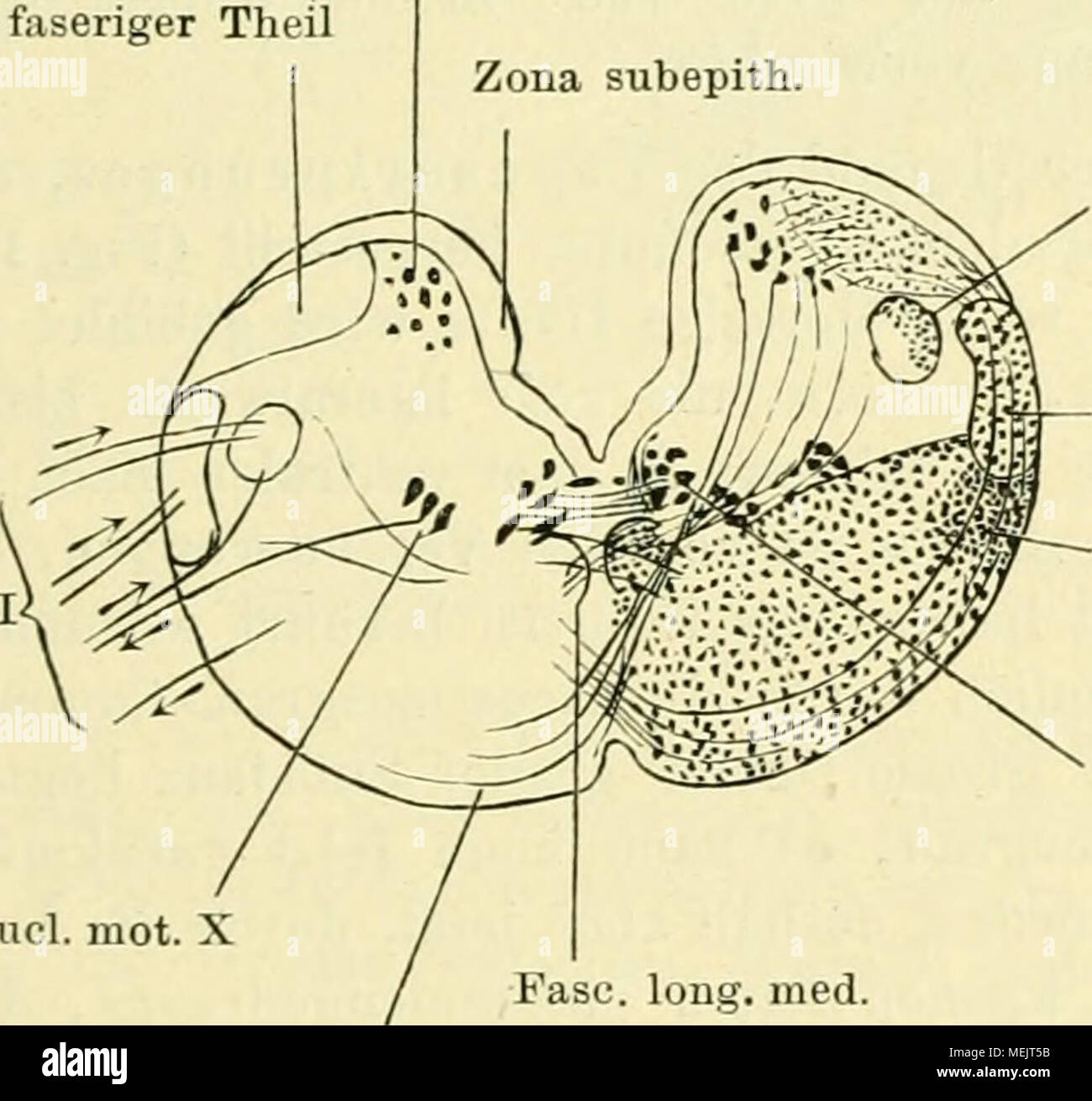 Ungewöhnlich Innere Anatomie Des Frosches Ideen - Anatomie Ideen ...