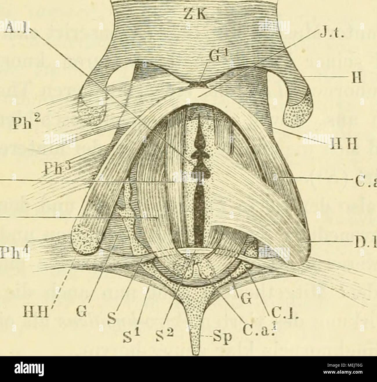Charmant Grau Anatomie Lied Fotos - Menschliche Anatomie Bilder ...
