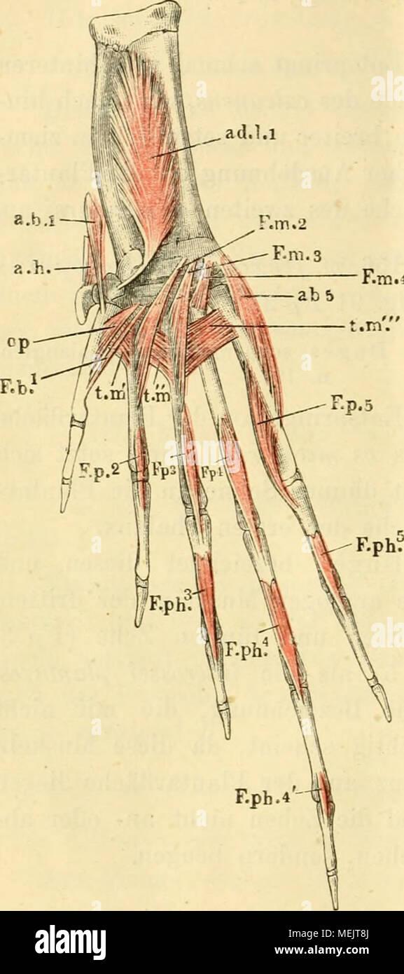 Nett Submandibulardrüse Anatomie Galerie - Physiologie Von ...
