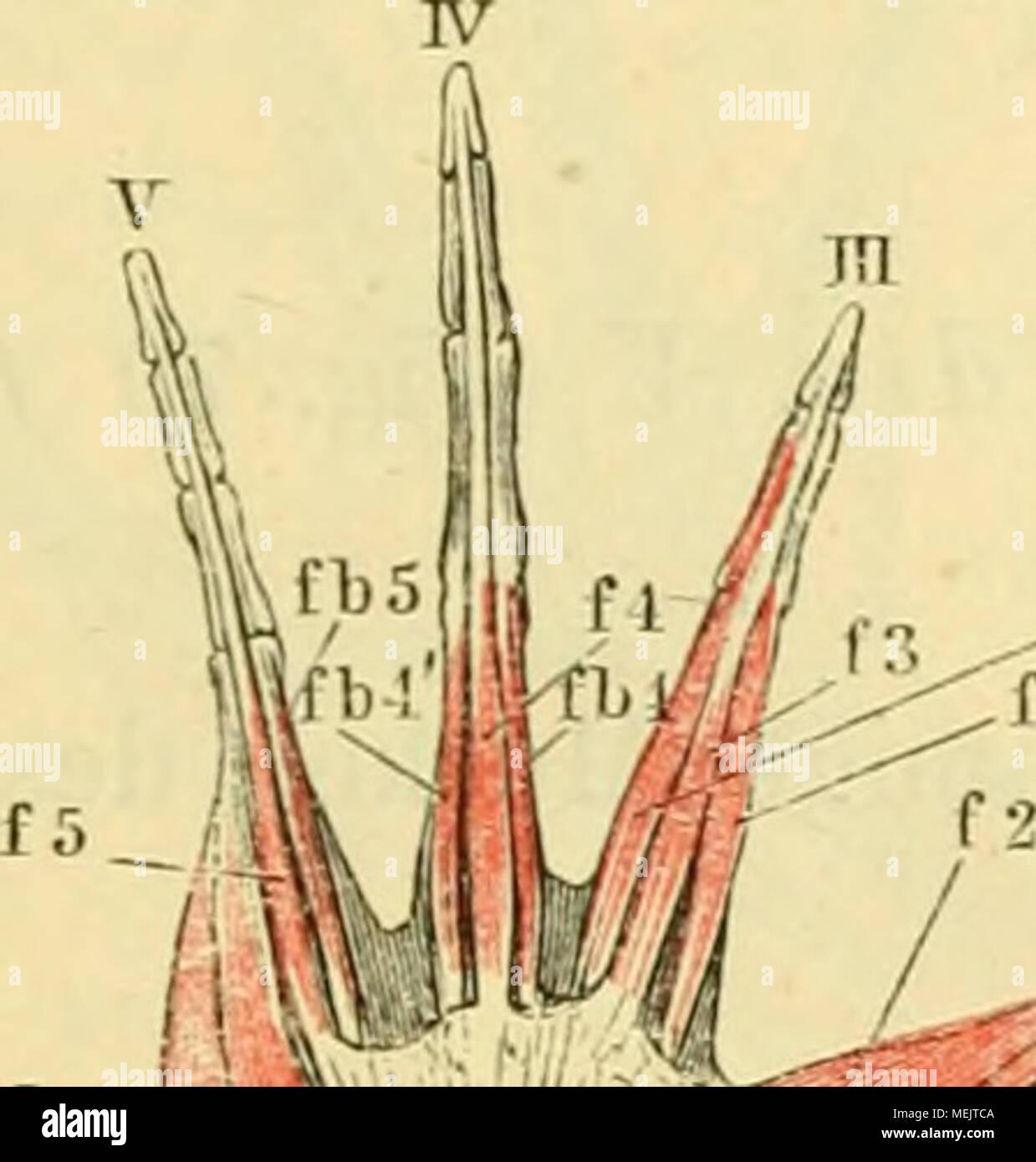 Ungewöhnlich Mcgraw Anatomie Und Physiologie Zeitgenössisch ...