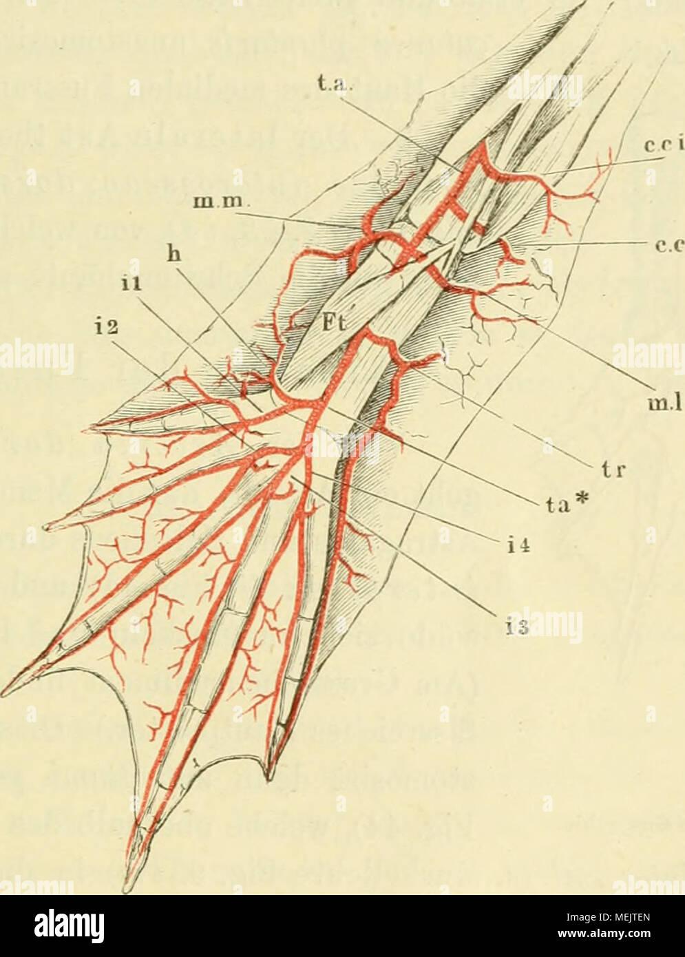 Gemütlich Kapitel 13 Anatomie Und Physiologie Färbung Arbeitsmappe ...