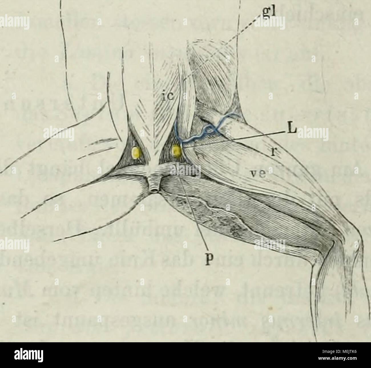 Großartig Anatomie Des Wirbels Fotos - Anatomie Ideen - finotti.info