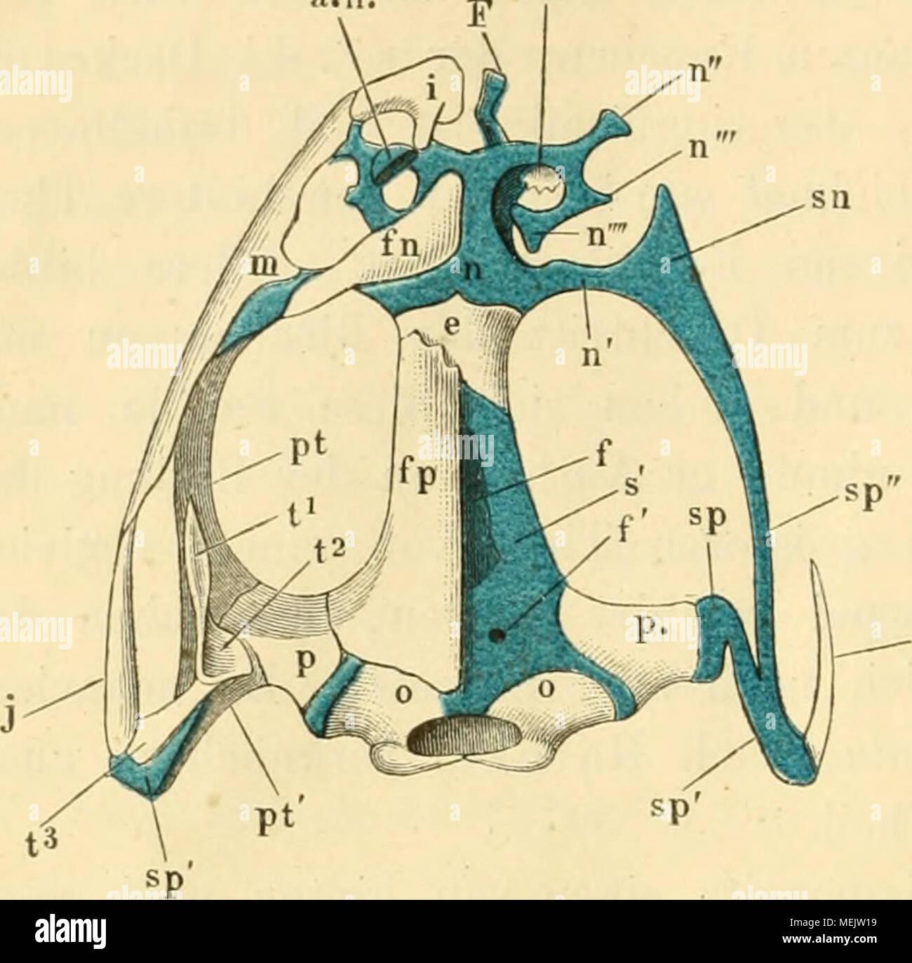 Fantastisch Seeleys Anatomie Und Physiologie 10. Ausgabe Ideen ...