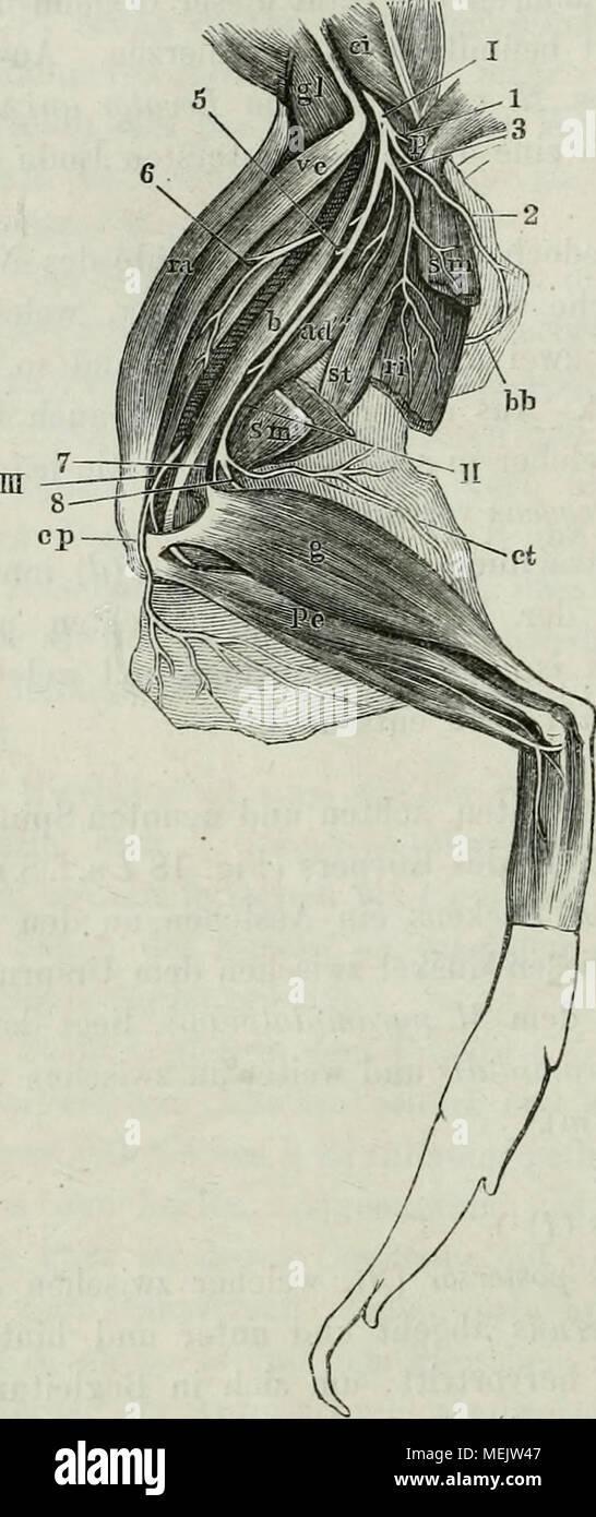 Wunderbar Anatomie Und Physiologie Der Venen Fotos - Menschliche ...