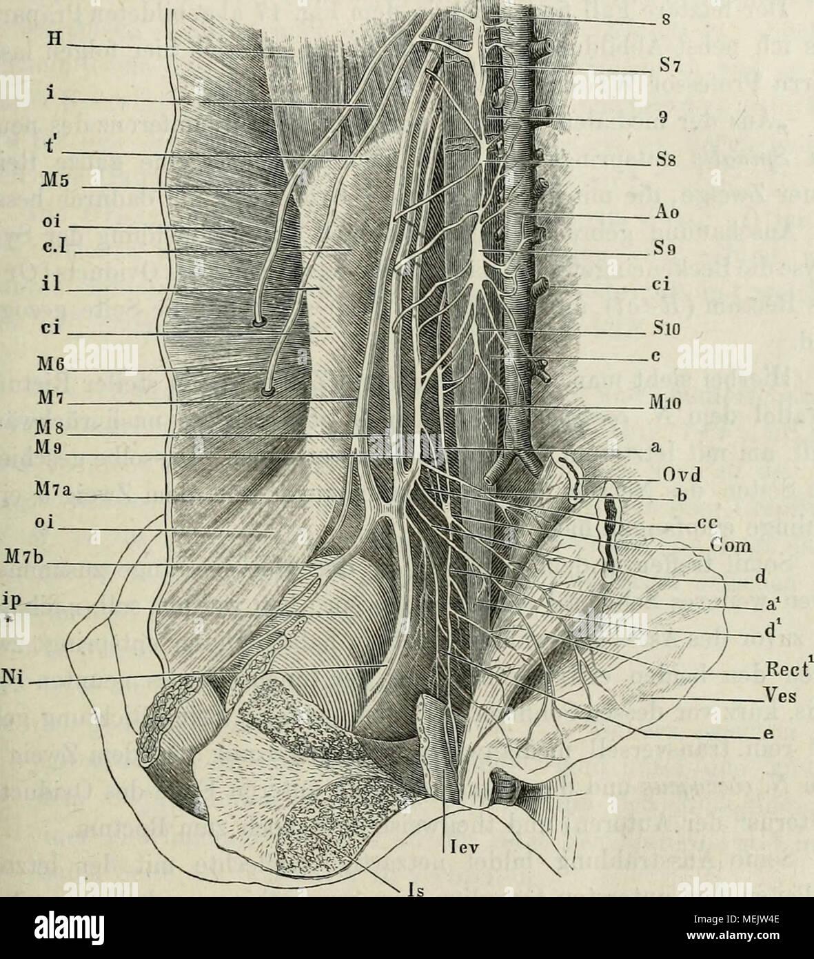 Großzügig Grundlagen Der Anatomie Und Physiologie Der 10. Ausgabe ...