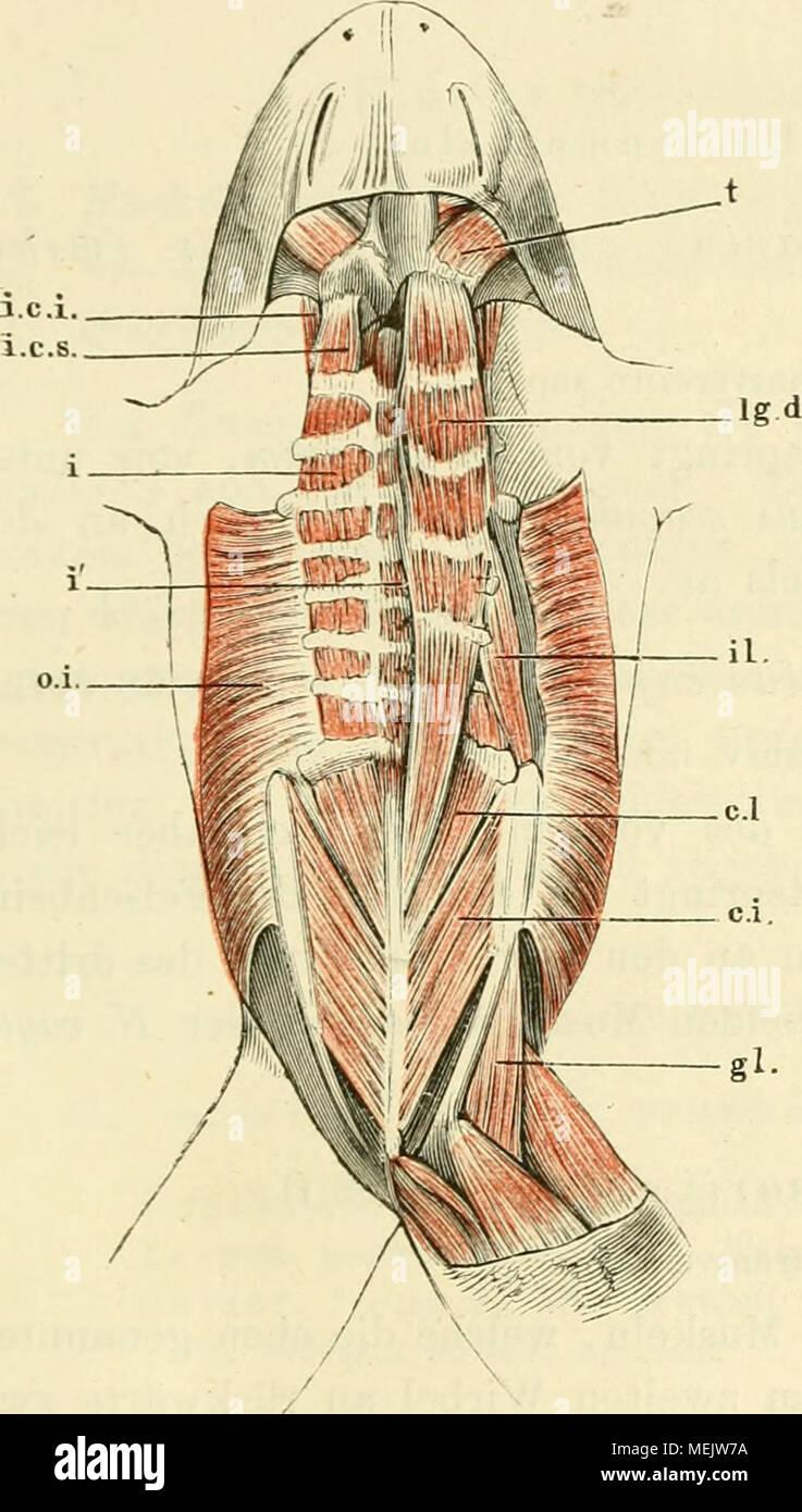 Atemberaubend Menschliche Anatomie Und Physiologie Antwortschlüssel ...
