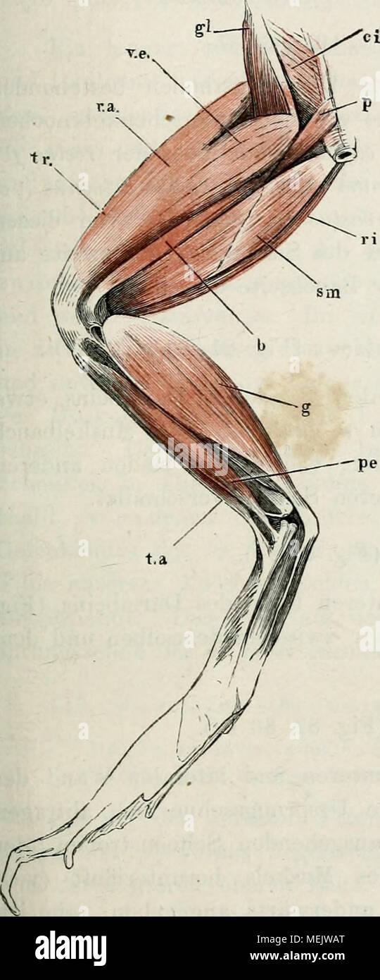 Ungewöhnlich Anatomie Des Linken Arms Galerie - Menschliche Anatomie ...