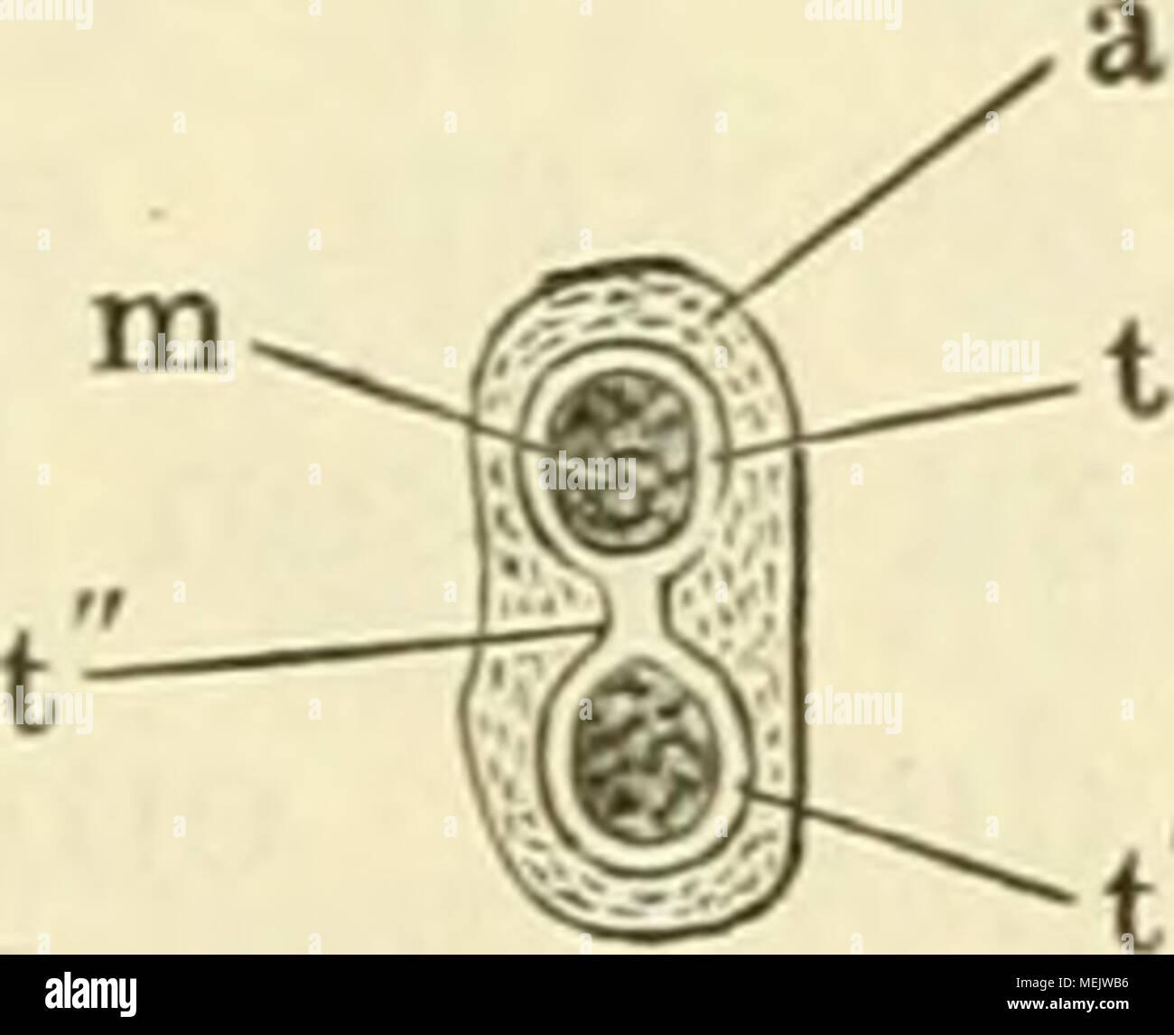 Großartig Anatomie Meloncholy Bilder - Menschliche Anatomie Bilder ...