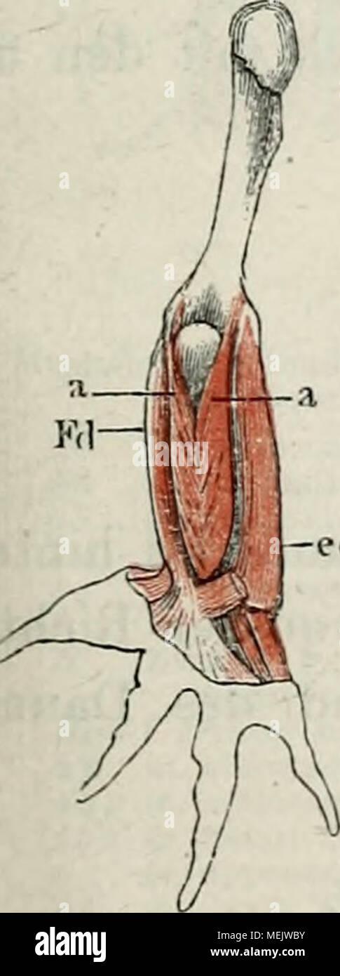 Großzügig Muskeln Des Arms Anatomie Zeitgenössisch - Anatomie Ideen ...