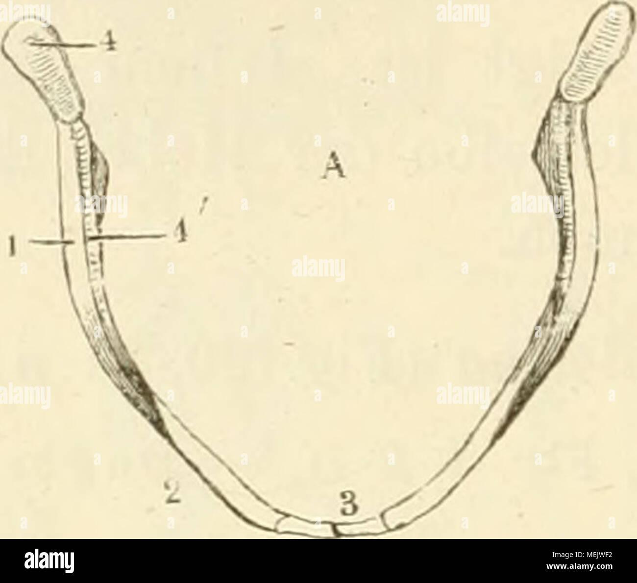 Beste Hesi A2 Anatomie Und Physiologie Praxis Test Bilder ...