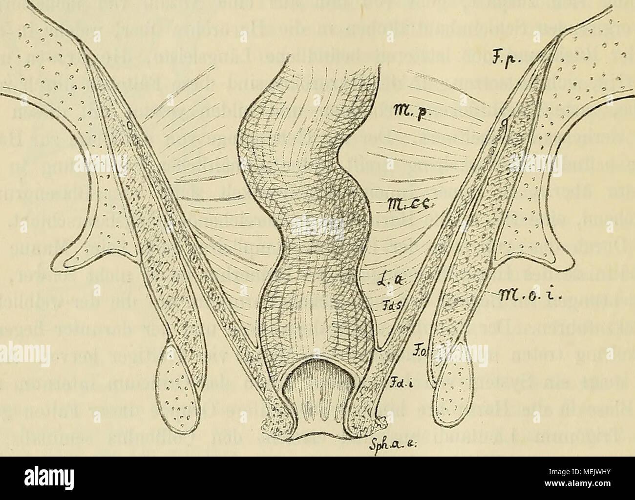 Die anatomische Nomenclatur. Nomina anatomica, Verzeichniss der von ...
