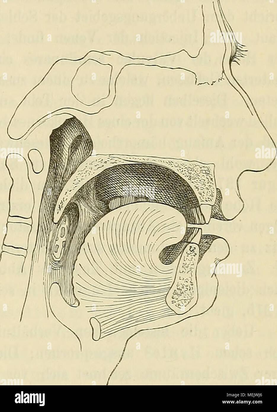 Nett Leberkörpersystem Bilder - Menschliche Anatomie Bilder ...