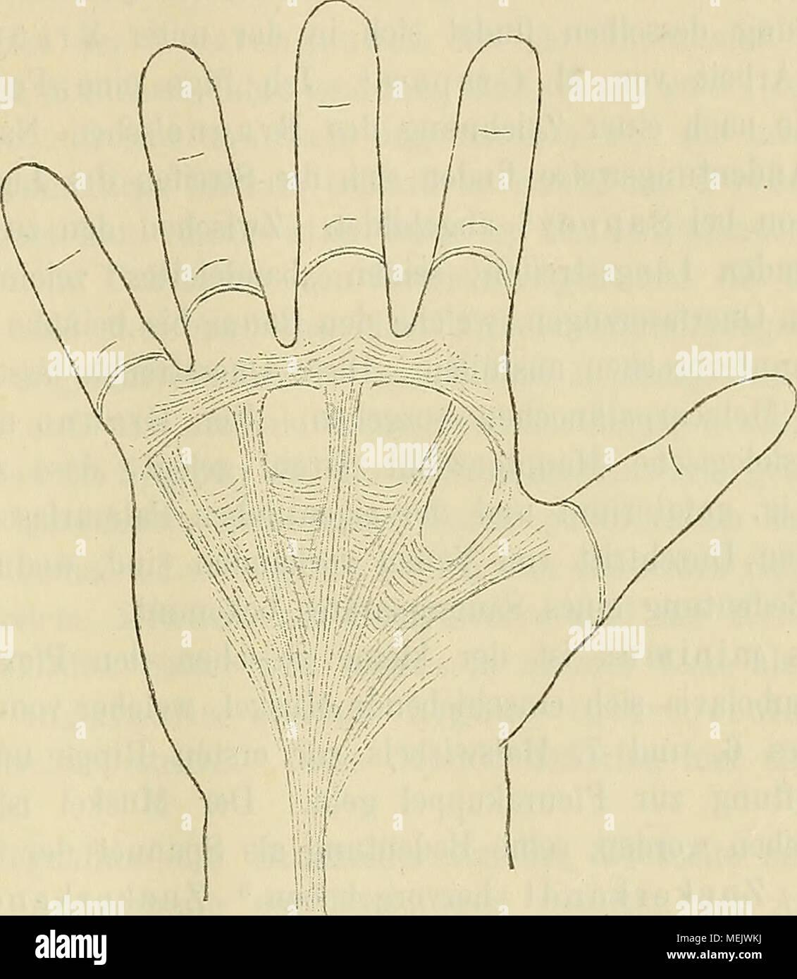 Ausgezeichnet Ausgabe Martini Anatomie Und Physiologie 9. Ideen ...