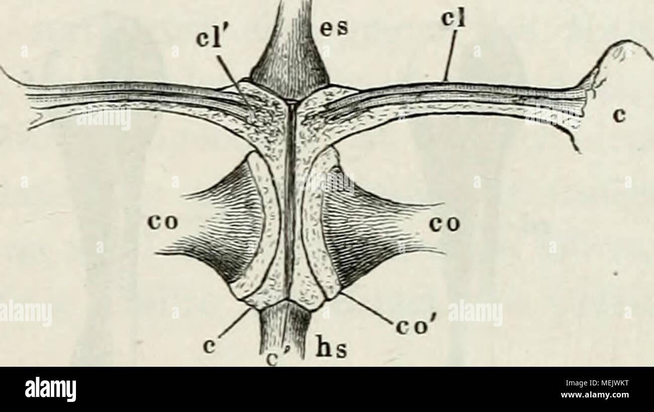 Atemberaubend Dreieckigen Raum Anatomie Fotos - Anatomie Ideen ...
