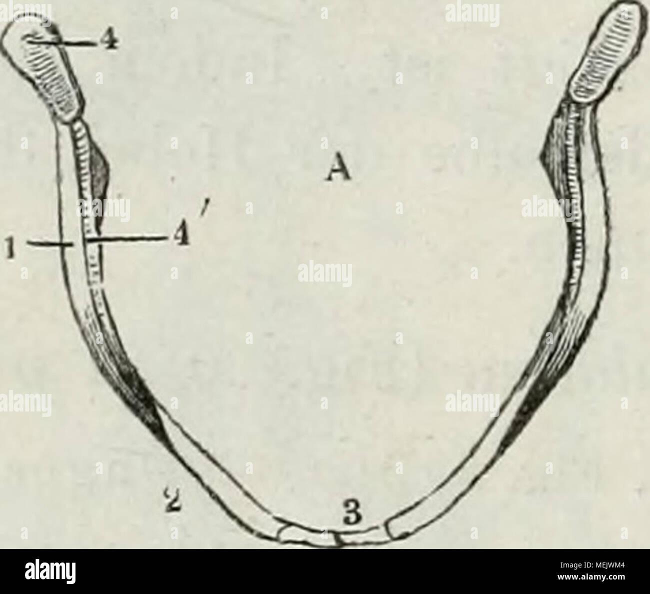 Großartig Anatomie Des Vulkans Fotos - Menschliche Anatomie Bilder ...
