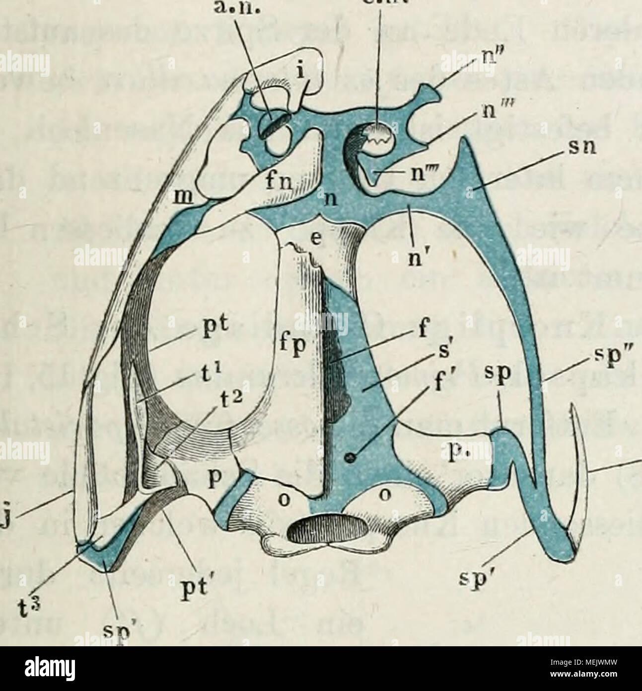Ziemlich Anatomie Und Physiologie Artikel Für Gymnasiasten ...