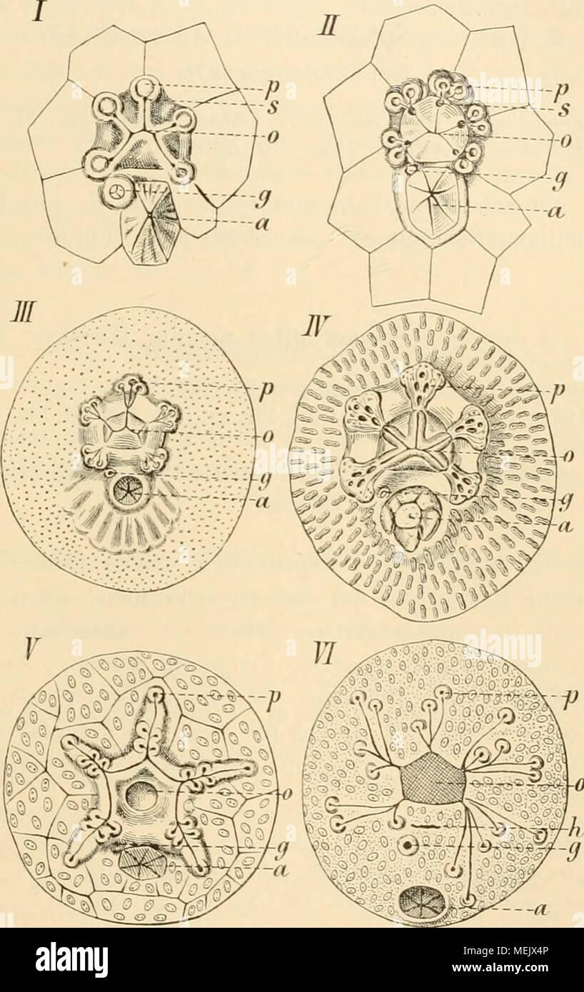 Wunderbar Anatomie Und Physiologie Arbeitsmappe Antworten Kapitel 11 ...