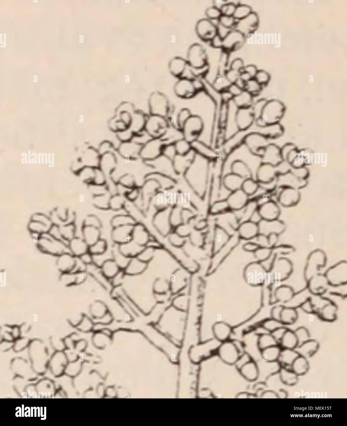 . Dictionnaire d'horticulture illustré / par D. Bois  préface de Maxime Cornu  avec la collaboration de E. André ... [et al.]. . Stock Photo