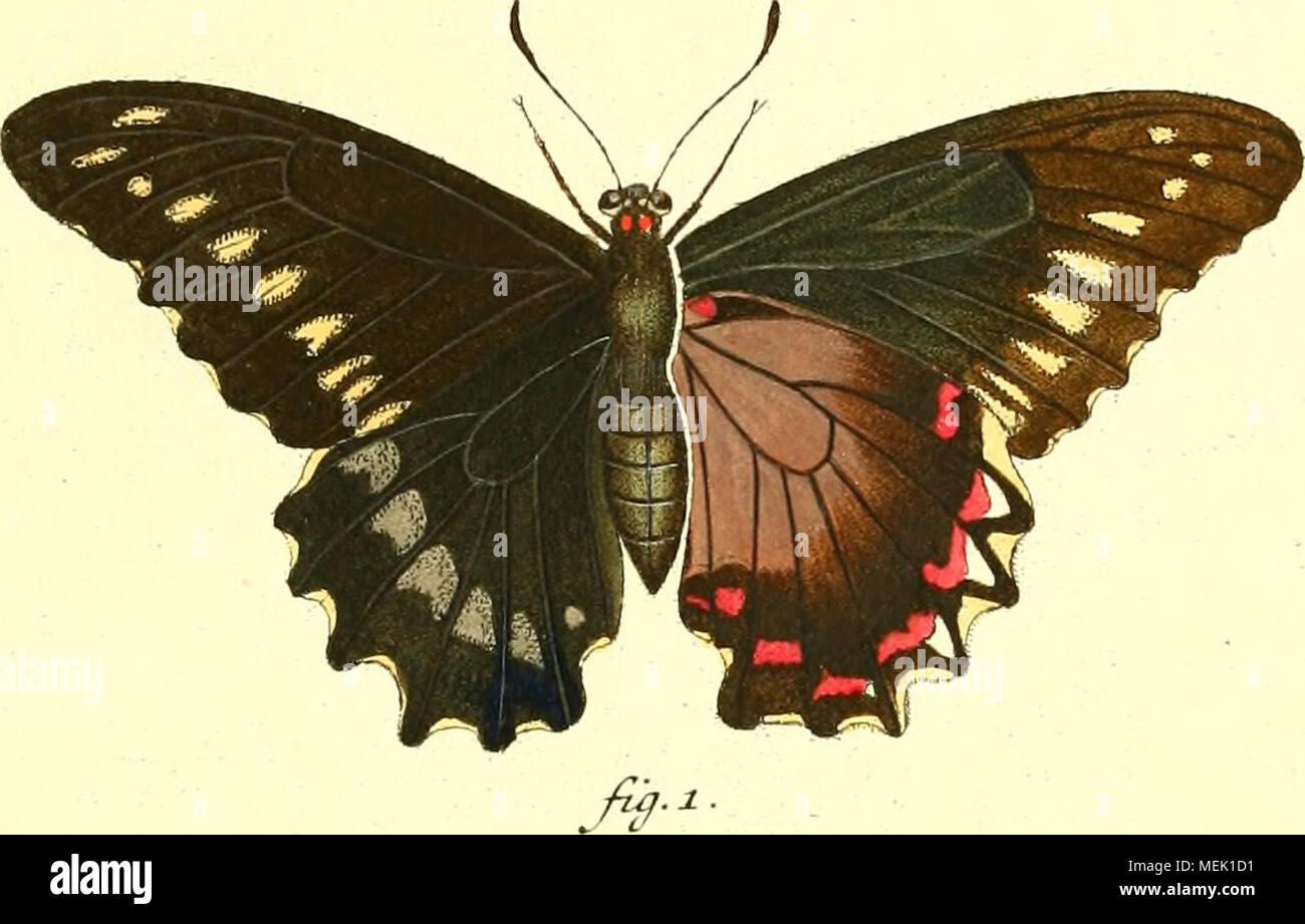 . Die ausländischen Schmetterlinge in Abbildungen nach der Natur . - Stock Image