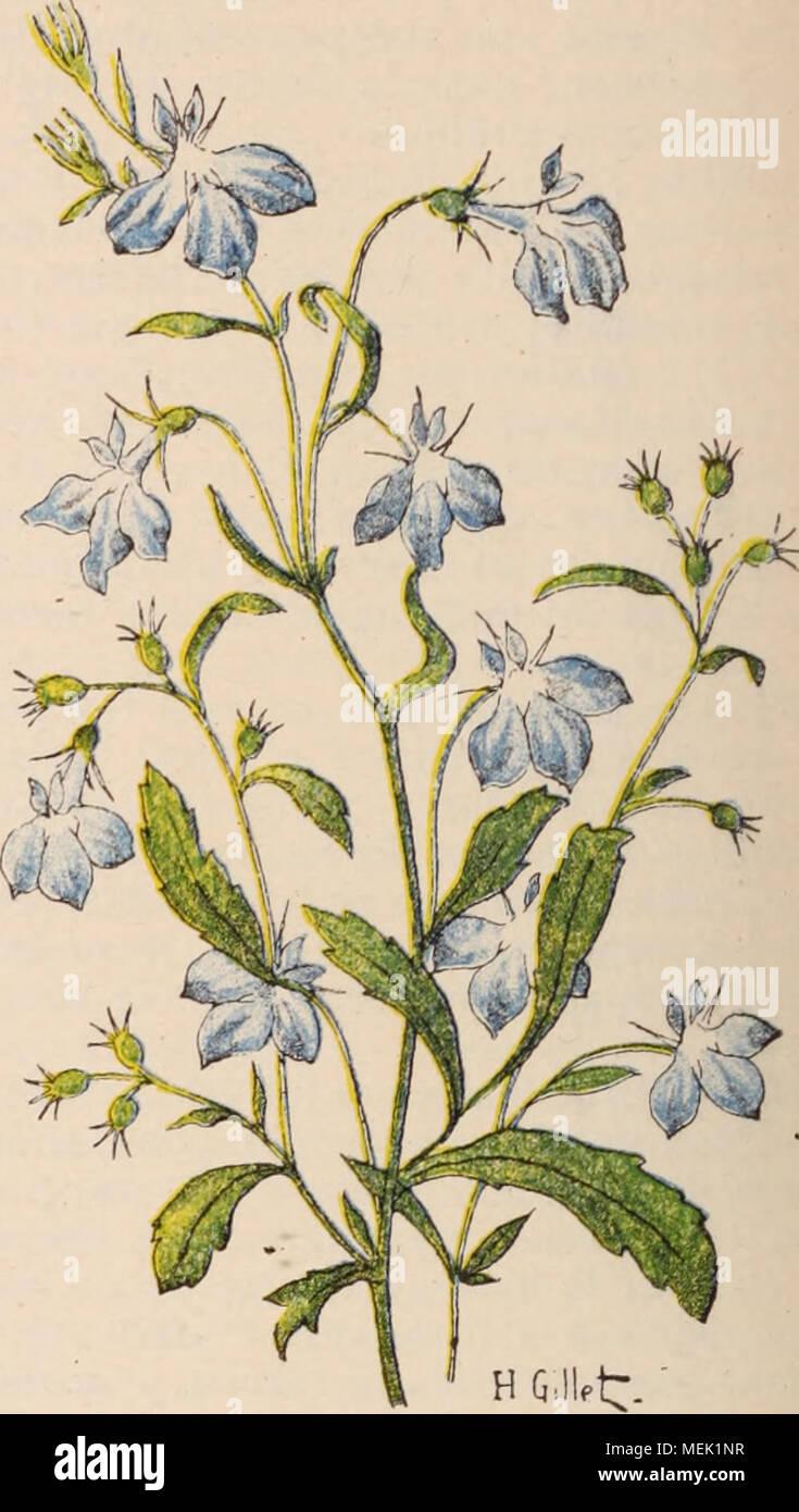 Fleur De Sous Bois Bleue dictionnaire d'horticulture illustré / par d. bois préface